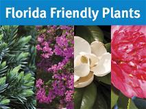 Plantas de bajo impacto ambiental para la Florida
